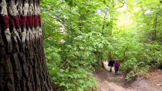 Места для пикников и нетронутый лес. Как преобразится Большая экотропа в Воронеже