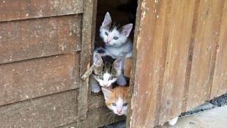 В Воронеже владелица котокафе спасла семь кошек, запертых в квартире после смерти хозяйки