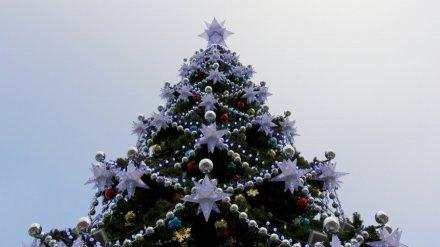 Воронежцам рассказали, когда зажгут главную новогоднюю ёлку от «тайного Санты»