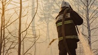 Воронежские следователи заинтересовались двумя ландшафтными пожарами