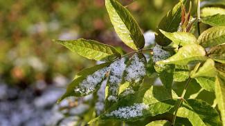 Синоптики дали прогноз на первый снег в Воронежской области