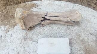 Под Воронежем на стройку привезли грунт с костями мамонта
