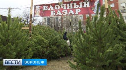 В Воронеже откроются 126 ёлочных базаров