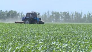 Воронежским аграриям помогут с мелиорацией полей