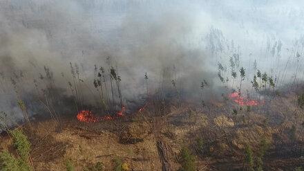 В Воронежской области локализовали мощный пожар на площади в 150 га