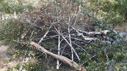 В воронежском лесопарке Оптимистов вырубили 50 сухих деревьев