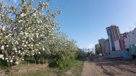 Челябинские архитекторы придумают, как застроить яблоневые сады в Воронеже