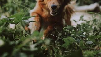 В Воронеже собака на глазах у хозяина укусила 11-летнюю девочку