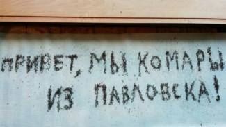 Обработку от личинок комаров в Воронежской области назвали неэффективной