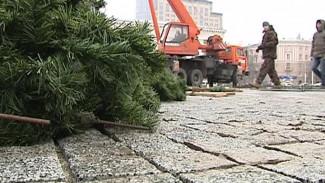 На главной площади Воронежа начали монтировать ёлку