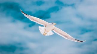 Воронежские филологи объяснили разницу между словами «лётный» и «летучий»