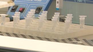 В Воронежской области начнут делать больше тестов на коронавирус