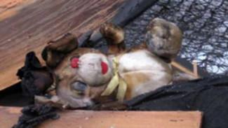 При пожаре в доме в Воронежской области пострадали две девочки