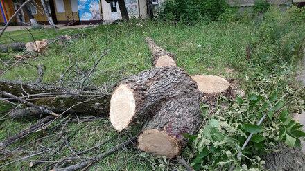 В Центральном районе Воронежа вырубят 249 деревьев