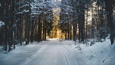 Сильные морозы ушли к югу Воронежской области