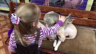События недели: запрет контактных зоопарков и осознанное потребление в жизни воронежцев
