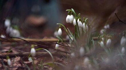 Первые апрельские выходные в Воронеже будут прохладными и дождливыми