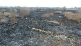 Воронежцев за устроенные пожары оштрафовали с начала весны на 200 тыс. рублей