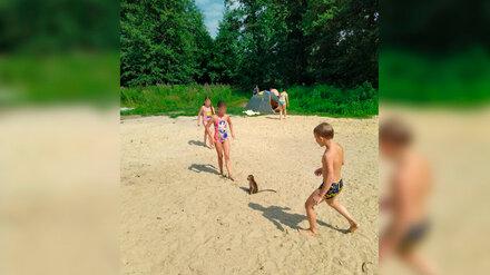 Воронежцы сфотографировали одинокую обезьянку на пляже у Усманки