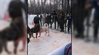 Полиция отказала в возбуждении дела по кровавым собачьим боям под Воронежем