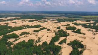 Пустыни и песчаные бури. Вырубка защитных лесополос вокруг Воронежа может обернуться катаклизмами