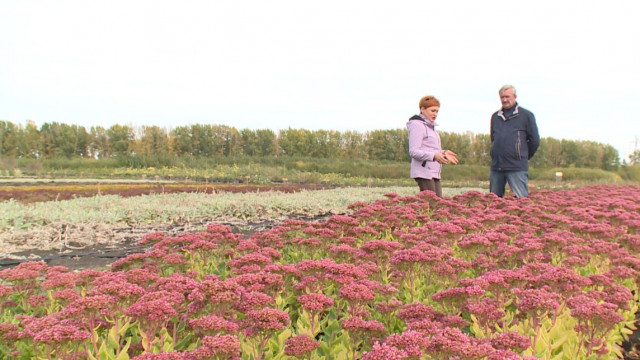 Воронежский агроном рассказал, как создать аптекарский огород