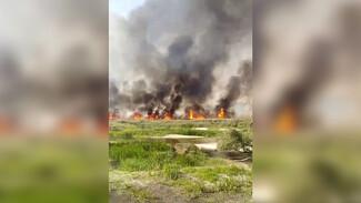 Под Воронежем вспыхнуло поле у реки: появилось видео
