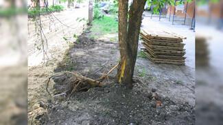 В воронежском дворе при ремонте дороги рабочие повредили клёны