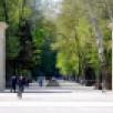 В Воронежской области открыли закрытые ранее из-за коронавируса парки