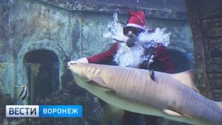 В Воронеже Деда Мороза отправили к акулам