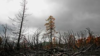 Эксперт объяснил, почему в Воронежской области выросла цена на погибшие при пожаре деревья