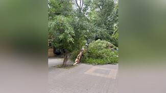 Сильный ветер повалил 6 деревьев в Воронеже