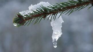 Последние зимние выходные в Воронеже будут тёплыми
