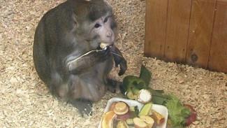 В Воронежском зоопарке будет проходить еженедельное показательное кормление животных