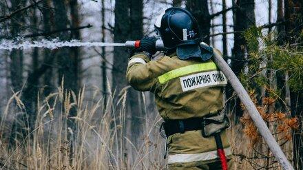 В Воронежской области потушили первые ландшафтные пожары
