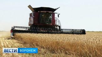 Воронежские аграрии собрали второй миллион тонн зерна