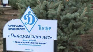 В Воронеже рядом со старейшим стадионом появился «Динамовский лес»