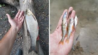 Эксперты взяли пробы воды в воронежской Россоши после массовой гибели рыбы