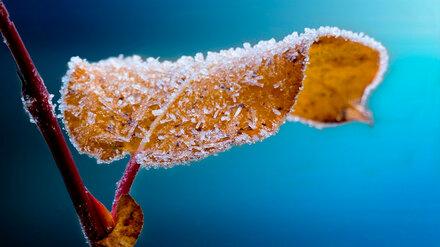 В Воронежской области к концу недели похолодает до -4