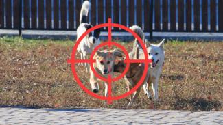 На место убитых приходят новые: зачем в Воронеже отстреливают уже стерилизованных собак