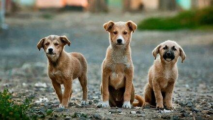 Мэрия Воронежа нашла подрядчика для отлова бездомных собак в пяти районах города
