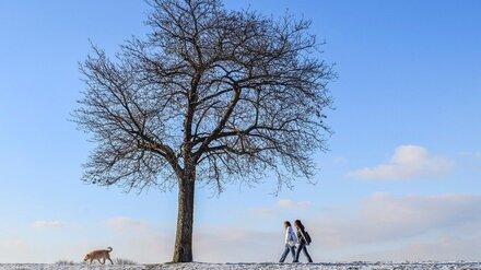 Февральская погода установила в Воронеже температурный рекорд