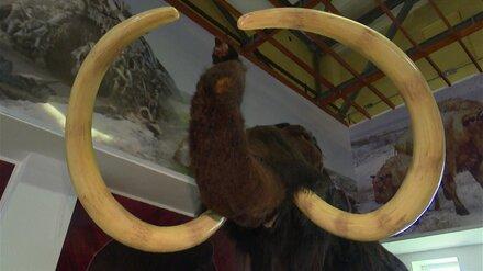 Власти начали подготовку к реконструкции воронежского музея-заповедника «Костёнки»