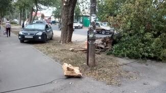 Ураган повалил огромные деревья в Воронеже