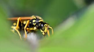 Смертельный укус. Воронежский эксперт объяснила, почему стоит опасаться ос и пчёл