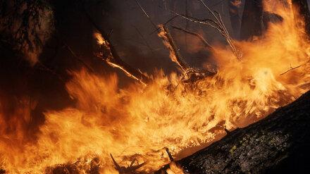 Площадь двух крупных природных пожаров в Воронежской области выросла до 170 га