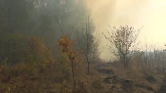 Лес в одном из районов Воронежской области горит трое суток