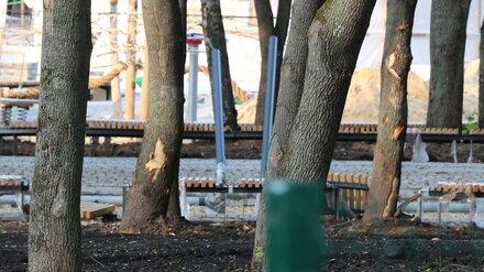 Воронежцы заметили изуродованные во время ремонта деревья в «Орлёнке»
