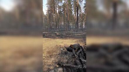 Воронежцы сообщили о продолжающемся пожаре на Кожевенном кордоне