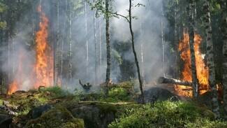 Высокий класс пожарной опасности установился на большей части Воронежской области